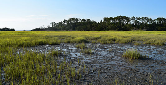 201608uf-marshes